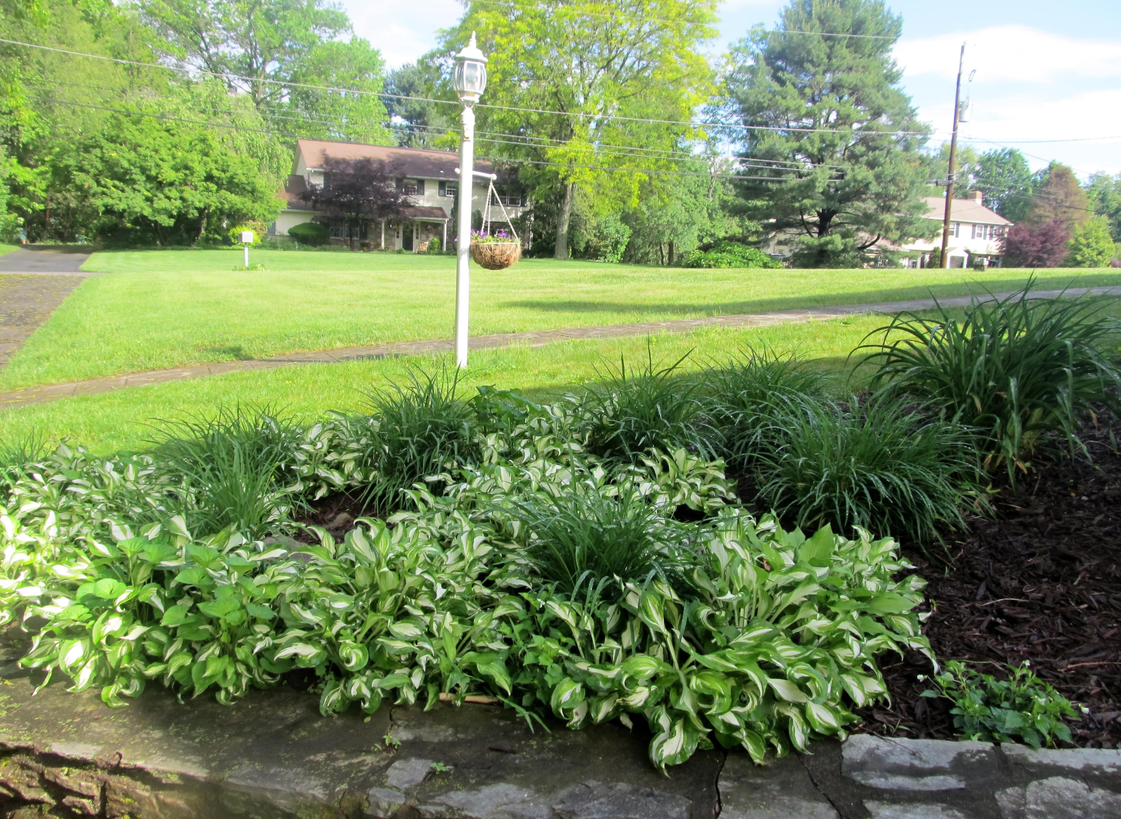 ... Newspaper Under Mulch For A Low Maintenance Garden
