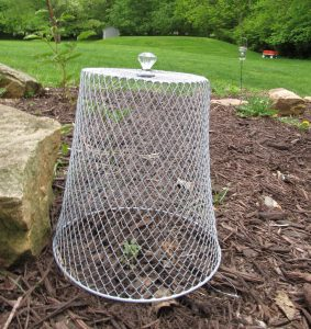 The diy garden cloche in the garden