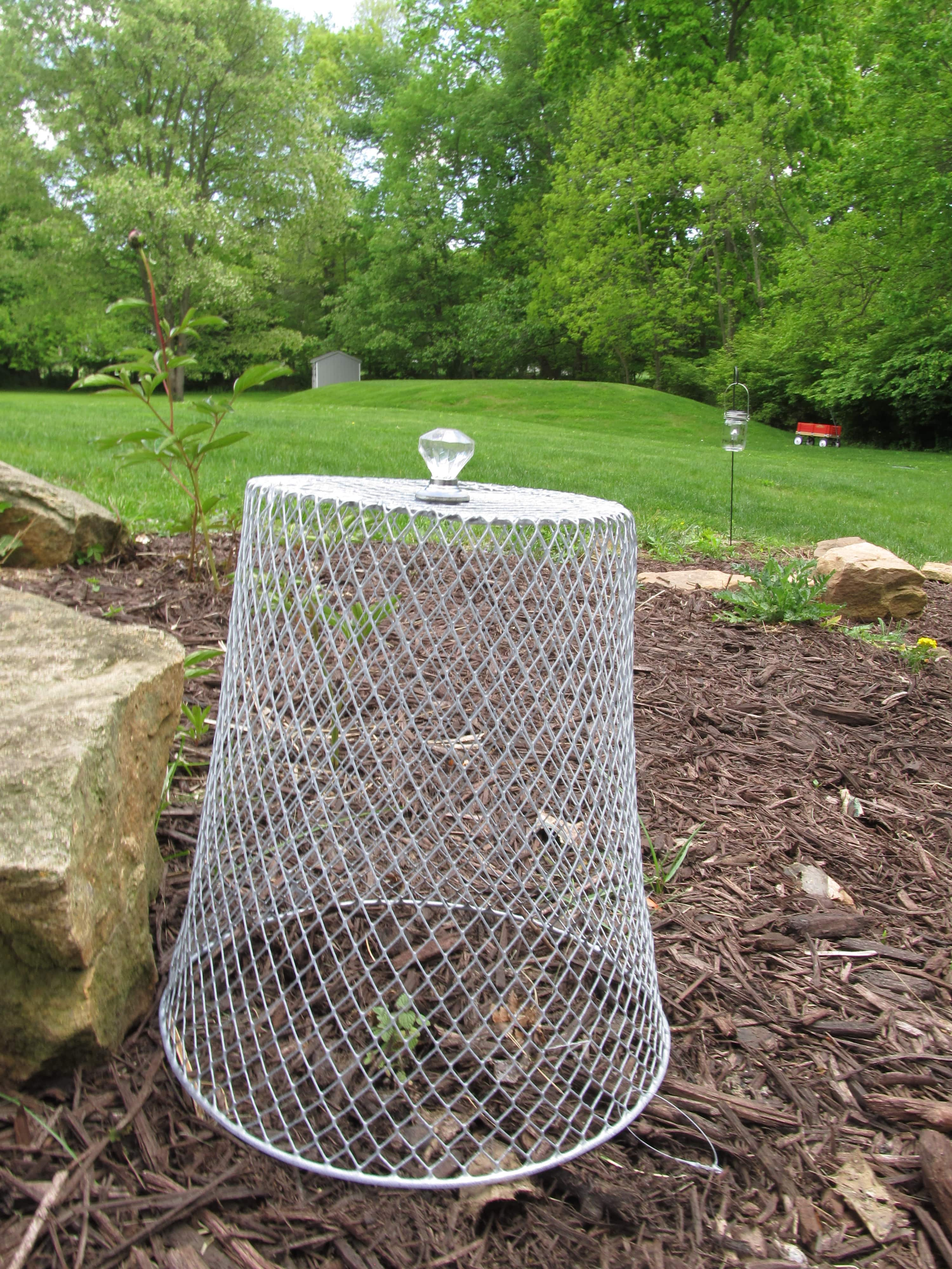 garden cloche dollar store diy how to keep pests away