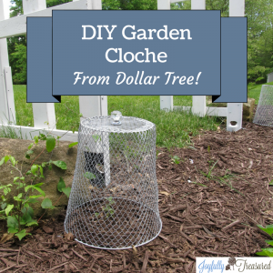 Dollar Tree Garden Cloche