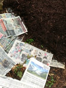 Natural weed control with newspaper