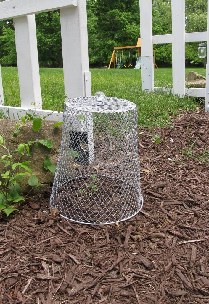 Garden Cloche Dollar Store Diy  How To Keep Pests Away