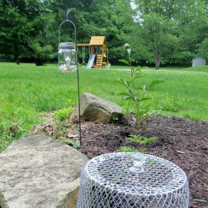 Mason Jar Lanterns in Garden with DIY garden cloche, Dollar Tree craft ideas