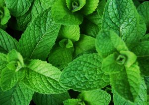 Using mint essential oil for cleaning