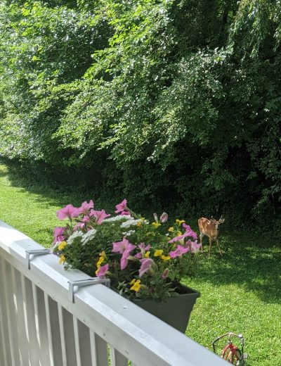 Deck Railing Planters with Adjustable Brackets